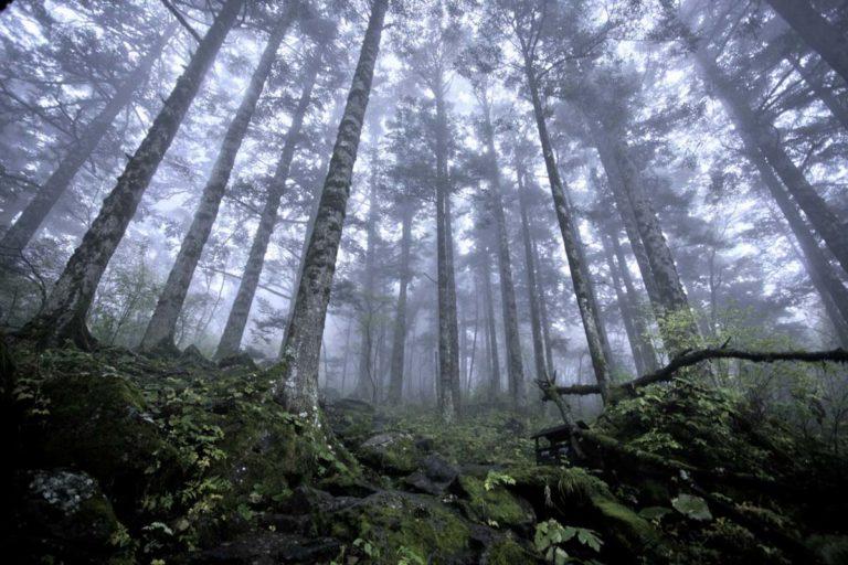 Empresa-forestal-de-pueblos-mancomunados