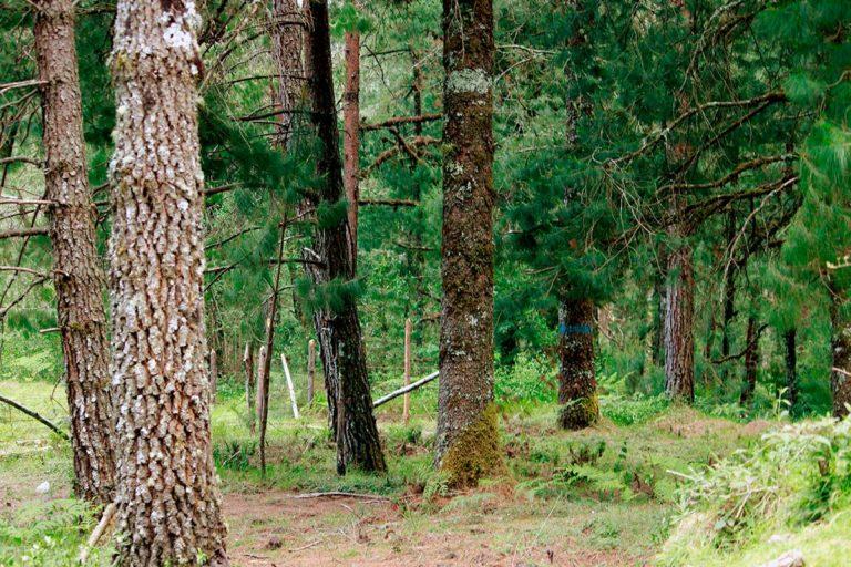bosque_el_rosario
