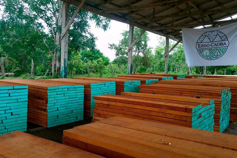 empresas-forestales-comunitarias
