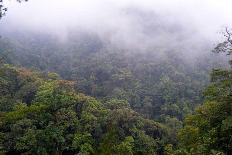 ley-forestal-a-consulta-forma-peticion-bosques-mexico