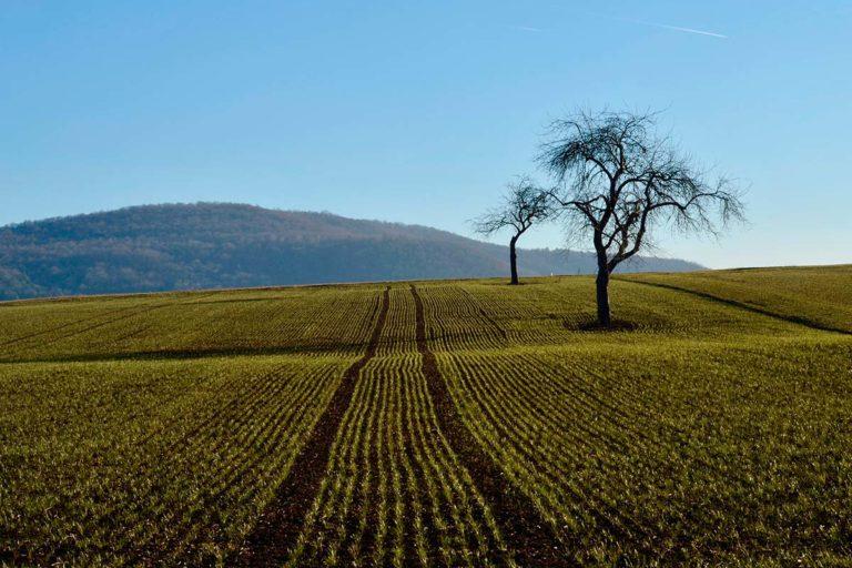 suelo-agricola